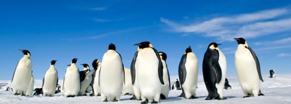 "Ungdomsfestival ""Pingvinresan 2"""